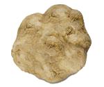 truffe-blanche-bianchetto-tuber-albidum-pico