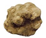 truffe-blanche-tuber_magnatum-pico-eurotartufi-bruxelles-belgique