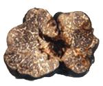 truffe-tuber-macrosporum-vittadini-eurotartufi-bruxelles-belgique
